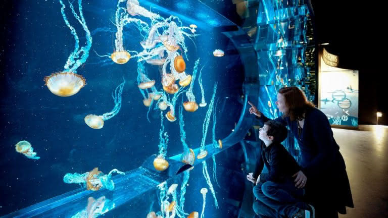 Nausicaa aquarium Prestans Vioso méduses
