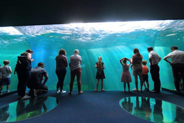 Nausicaa aquarium Prestans Vioso public
