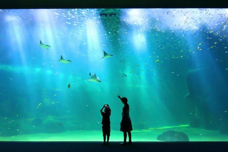 Nausicaa aquarium Prestans Vioso raies