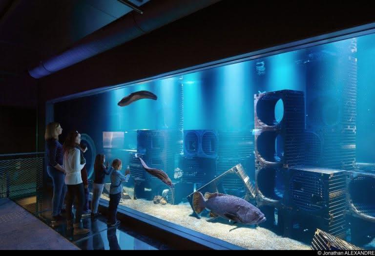 Nausicaa aquarium Prestans Vioso mérou