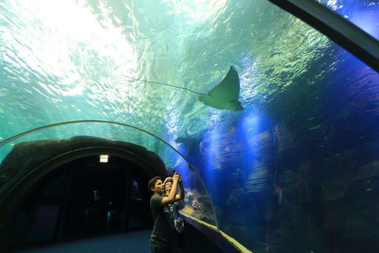 Nausicaa aquarium Prestans Vioso raie tunnel